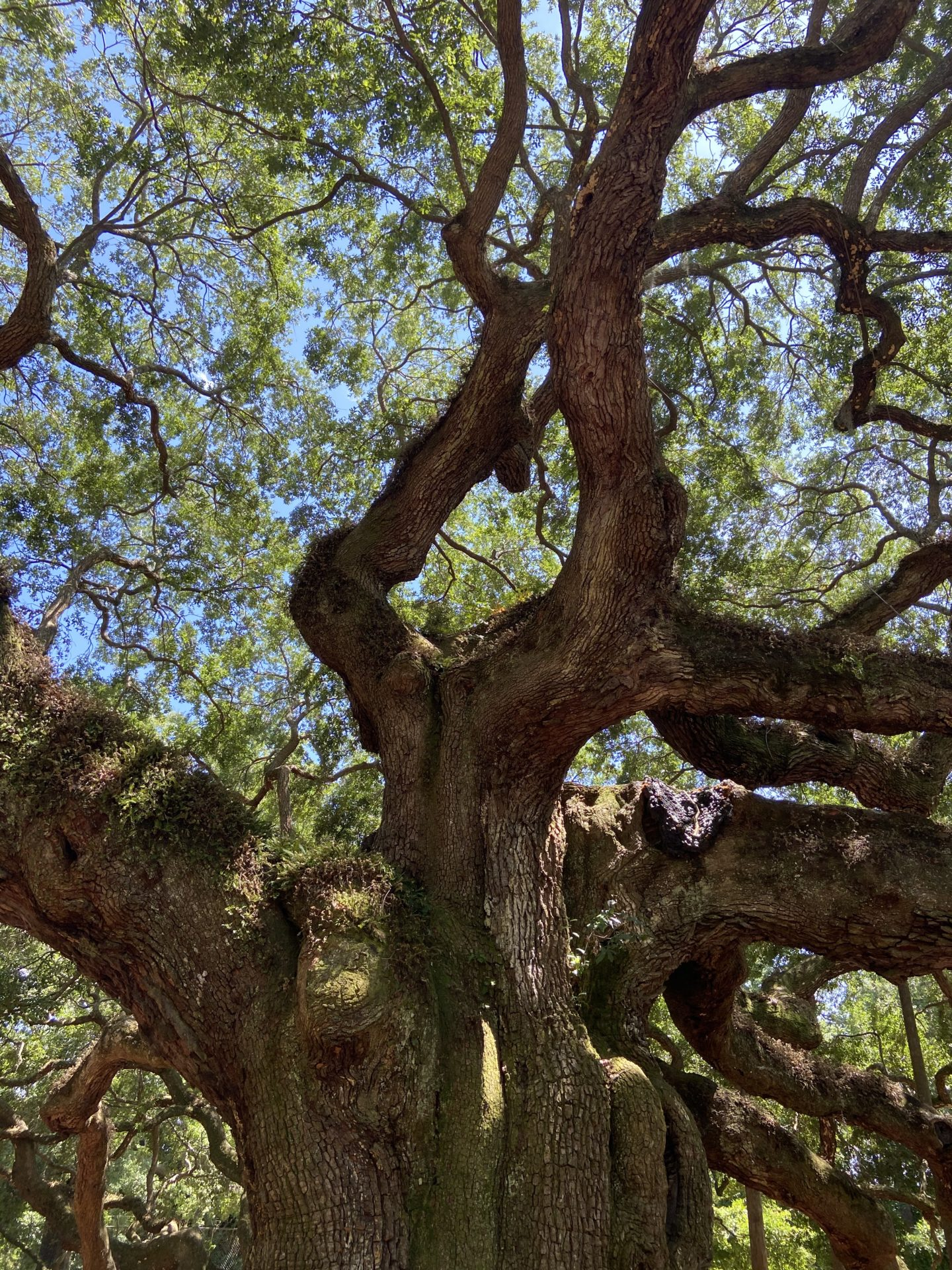 Angel Oak tree South Carolina